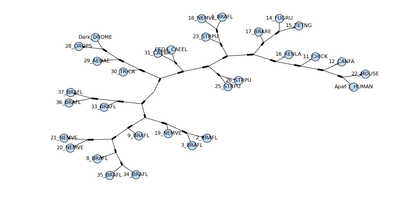 Unrooted tree with colored nodes