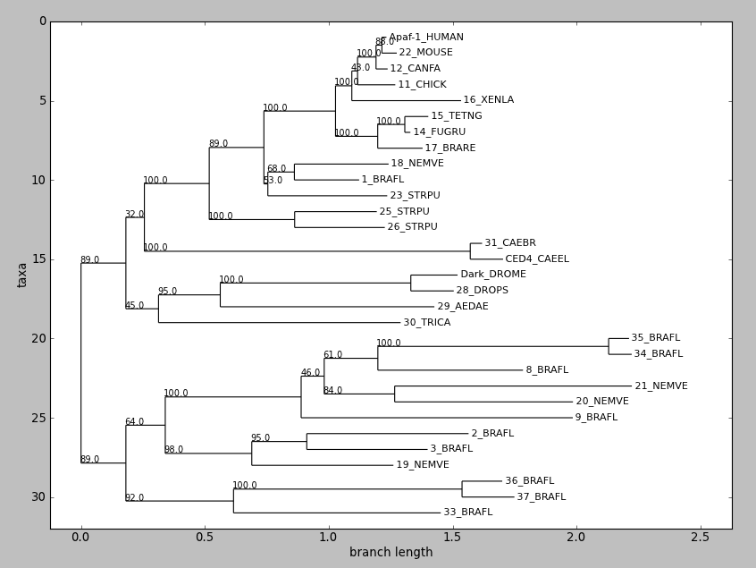 Rooted phylogram, via Phylo.draw